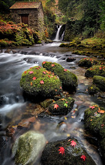 Leafy Lament (Pete Rowbottom, Wigan, UK) Tags: rydal lakedistrict autumn winter 2017 2018 leaves moss landscape stream waterfall rocks trees lonehouse ambleside cumbria peterowbottom red art light portraitformat water slowshutter longexposure nikond750 wideangle outdoor yellow green beautiful scenic falls rocky rural remote rockyfalls unesco lush gold earlymorning geotagged lakedistrictnationalpark visitengland woodland