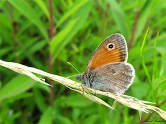 Butterfly 1547 (+1000000 views!) Tags: butterfly borboleta farfalla mariposa papillon schmetterling فراشة