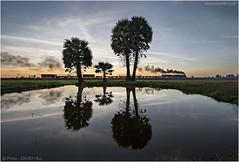 Myanmar Sunset (channel packet) Tags: myanmar burma sunset steam train locomotive rice paddies reflection davidhill