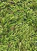 58661.01 Raphanus sativus (horticultural art) Tags: horticulturalart raphanussativus raphanus radish pods pattern seedpods psychedelic