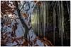 Schnee, Sonne und Eis (Ralph Punkenhofer) Tags: landschaft moor schnee tanner winter winterfotografie snowshoeing schneeschuhwanderung eis sonne winterwonderland gegenlicht landschaftsfotografie landscapephotography