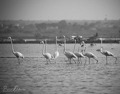 DSC_9200 (@sumitdhuper) Tags: beauty wallshare animal birds