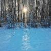 Low. (Hilary Causer) Tags: woodland millenniumwood leominster herefordshire wintersun lowsun sunlight shadows snow lightonsnow walkingwithmycamera nature winter december