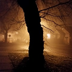 tree and fog (Tales From There) Tags: winter night fog foggy cold creepy halloween cityscape urban nature contrast street streetlight light vancouver bc britishcolumbia canada