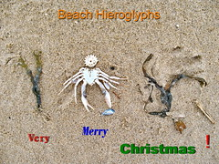 Beach Hieroglyphs (Mattijsje) Tags: merrychristmas hieroglyphs hierogliefen hiëroglief beach sand creature monster radertje crab crap weed seaweed zeewier strand mess messy garbage trash merry christmas strandvondst