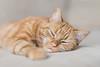 Minty (Dirk Bruyns) Tags: minty kat katze kot cat chat f12 fujifilm fuji fujinon xt1 56mm