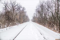 Hiver, Gatineau, P. Q. Canada - 4207 (rivai56) Tags: gatineau québec canada ca hiver pq winter neige sonyphotographing chemin de fer en sous la