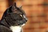Felix (DaveFlker) Tags: felix cat