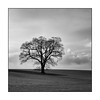 001/100x Square format (neals pics) Tags: 100xthe2018edition 100x2018 image1100 my100x–squareformat blackwhite monochrome tree field farmland countryside rural winter cloud weather nature natural world suffolk uk