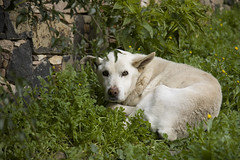 Old Fart (delightfully jaded) Tags: myneighbour smelly cranky neghbourhooddog