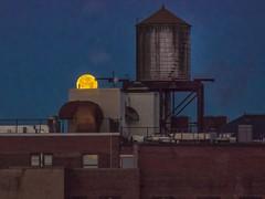 Super Size Wolf Moon (Mildred Alpern) Tags: moon watertower building roof outdoors bricks platform