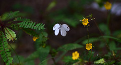 Stuck in a moment (the_w0rld_as_i_it) Tags: butterfly india kerala flowers wild nature monsoon amateur aspiringphotographer wings nikon