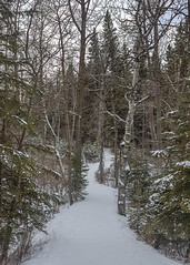 A trail runs through ... (D.Spence Photography) Tags: reddeer alberta canada kerrywoodnaturecentre nature trees park woods snow winter forest tree wood trail landscape vanishingpoint path walkway seasons