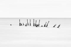 Posts in the Sea (mclcbooks) Tags: posts pier sea ocean longexposure le blackandwhite monochrome landscape belize ambergriscaye sanpedro ramonsvillage