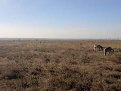 2017-12-28 17.16.31 (dcwpugh) Tags: travel nairobi kenya safari nairobinationalpark