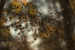 Forest in the evening sun (Edita Ruzgas. Thanks for your visit.) Tags: forest woods edita ruzgas evening sun fall branches winter bare tree trees close up bokeh brown yellow color beautiful light dried leaves sunset art artistic shot
