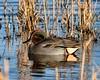 Teal Marshside RSPB F00049 D210bob DSC_8477 (D210bob) Tags: teal marshside rspb f00049 d210bob dsc8477 nikond7200 wildlifephotography birdphotography nikon naturephotography nikon200500f56 lancashire