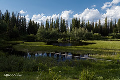 Moose Pond Sans Moose_27A0286 (Alfred J. Lockwood Photography) Tags: alfredjlockwood nature landscape afternoon pond grandtetonnationalforest togwoteepass field rockymountains clouds forest grasses wyoming