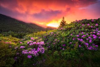 North Carolina Outdoors Mountain Landscape Appalachian Trail Spring Flowers Sunset