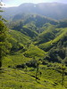 The Valley (sibymanuel2) Tags: nature olympus munnar tea estate kerala idukki india ngc