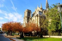 IMG_2040  PARIS SQUARES  LE SQUARE JEAN XXIII, le long de la cathédrale  NOTRE DAME   PARIS 4  ILE DE LA CITÉ (closier.christophe) Tags: notredamedeparis squarejeanxxiii jardins cathedrale paris christopheclosier
