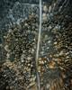 Needles (Philipp Sarmiento) Tags: philipp sarmiento canon sigma dji inspire weltenburg eibsee zugspitze bayern bavaria winter sommer summer sunset lake landscape waterscape regensburg ratisbona dom