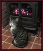 Winter Warmth (M E For Bees (Was Margaret Edge The Bee Girl)) Tags: cat fire fireplace warm warmth indoors feline animal pet black white stripes red tiles canon merlin sitting burning