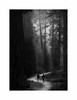 Sequoia National Park (Joe Franklin Photography) Tags: sequoianationalpark sequoia nationalpark blackandwhite bw almostanything trees california ca walk hike woods forest joefranklin wwwjoefranklinphotographycom