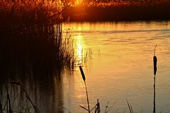 The lake in the evening light. (Eddie Crutchley) Tags: europe england cheshire lake nature beauty sunlight simplysuperb sunset bullrush flash wonderful greatphotographers