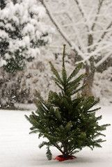 Snow - Dec. 8, 2017