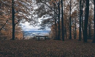 Kinnoull woodland Walk_G5A4419