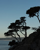 Cypress Trees (RPA-Home) Tags: pointlobos seascape