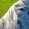mane concern (sculptorli) Tags: mane horse abstract pferd konj cheval 马 馬 лошадь ló うま cavallo caballo hevonen koń arklys kůň equus cal گھوڑے حصان paard hest кінь жылқы άλογο hobune hobu zirgs cabalo päerd коњ морь ცხენი кон cavalo ձին juba melena mähne crinière 鬃毛 грива sörény yele