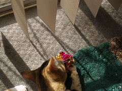 private 026 (lorablong) Tags: westhollywood california cat pet twix