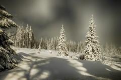 Winter Wonder Forest (sigiha1953) Tags: winter schnee snow wald forest bayern bavaria landschaft landscape