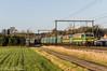BLOG HLE 2141 & 2159  Testelt (Tren di Cédrico) Tags: nmbs sncb lineas blog 2141 2159 zichem testelt cargo hle staaltrein alstom