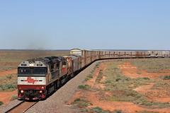 1GP1 Coondambo Overpass (evenst3132) Tags: sct specialisedcontainertransport sctclass southaustralianrailways trainsofaustralia trains transaustraliarailway australiantrains aussietrains aussieoutback diesel eastwest intermodaltrains