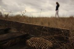 Walk The Line (universeobserver) Tags: canon canonxsi nature