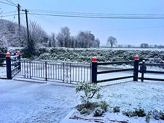First Snow (JulieK (thanks for 6 million views)) Tags: hss iphonese wexford ireland irish gates fence snow htt telegraphpole trees echium