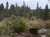 Schierke_e-m10_1019021973 (Torben*) Tags: olympusm1442mmf3556iir olympusomdem10 rawtherapee harz schierke wald forest