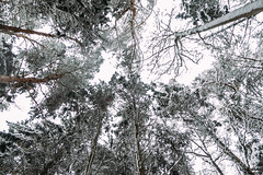 Salcey Forest (dominictucker) Tags: forest snow fujifilm fujix xt2 salcey england northamptonshire uk united kingdom