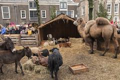 Christmas Market 2017 (Pieter Mooij) Tags: kerststal dordrecht