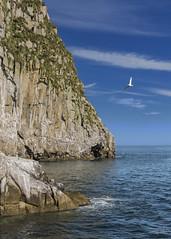 Kenai Fjords.2 (lgflickr1) Tags: select alaska animalplanet kenai ocean outdoor bird blue coast kenaifjords water seagull clouds