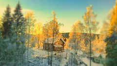 The red cabin with the golden rays❄️ (evakongshavn) Tags: redhouse redcabin red goldenlight golden light yellowlight yellow white winter winterwonderland winterwald winterlandscape tiltshift forest foret sunlight wald tree trees snow natur nature naturphotography natureart art fineart fineartphotography naturbilder naturescape naturelover naturelandscape naturephotography naturelovers fantasticnature naturaleza naturescenes scenery snowglobe lifethroughahole