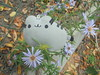 688 (en-ri) Tags: pusheenthecat lilla fiorellini littl flowers sony sonysti gatta cat miao pupazzino