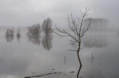 Hoog water IJssel, Deventer
