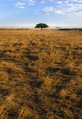 _D2A3969 (elliotsphotos) Tags: masai mara kenya africa safari