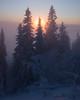 Idre VI (Gustaf_E) Tags: dalarna dimma dis forest gran idre kväll landscape landskap mist skog snow snö spruce sun sverige sweden vinter winter woods