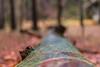 IMG_0121 (Le Radiophare) Tags: czech republic vsemly ceska kamenice srbska forest autum january intercamp ferdinanda