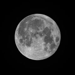 Hungry Like The Wolf (Moon) (edmason88) Tags: supermoon wolfmoon fullmoon night tamron150600 strathconacounty alberta canada
